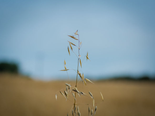 Agriculture Close-up Day Horizontal Landscape Nature No People Outdoors Plant Sky Wheat