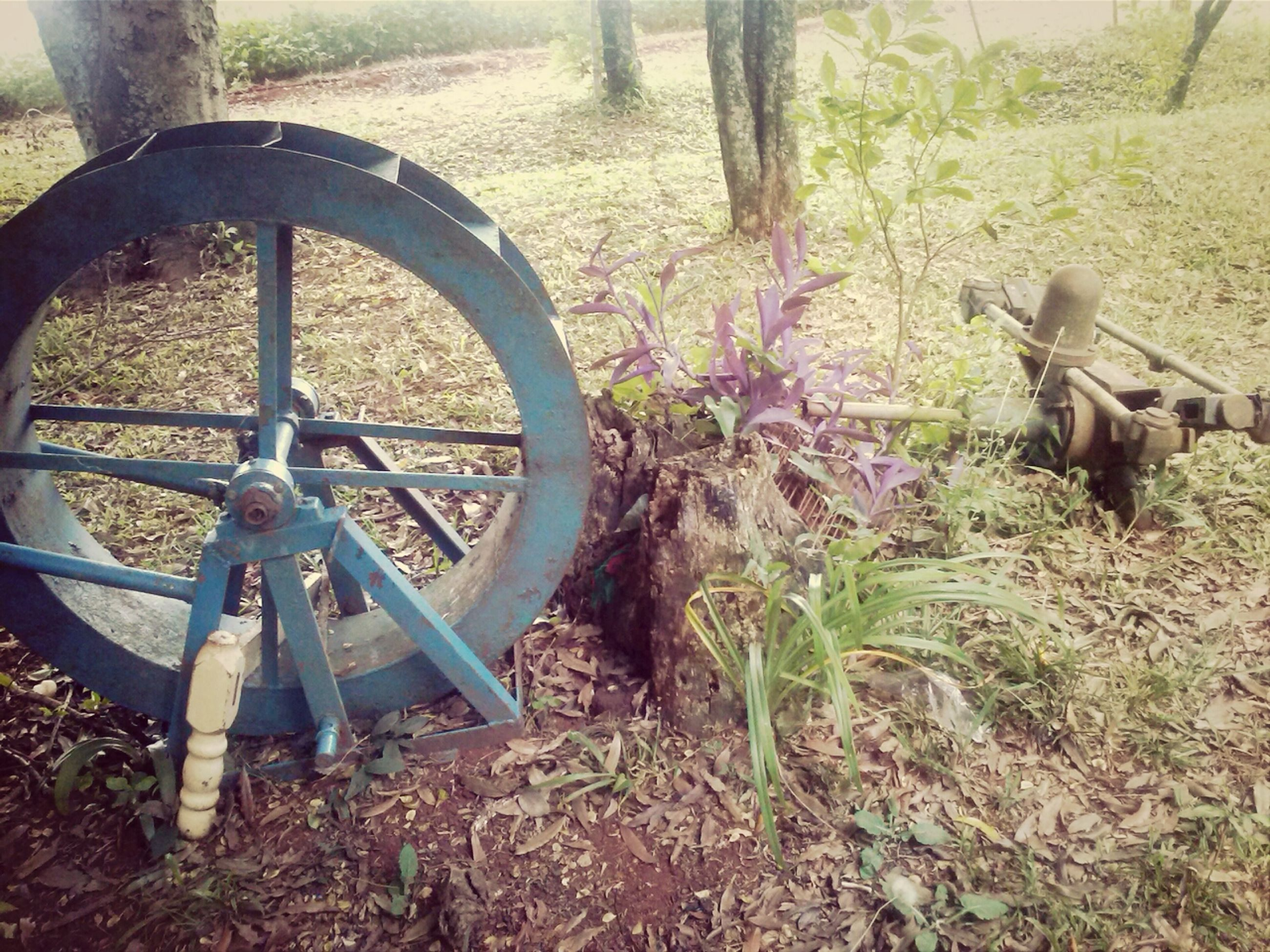 abandoned, obsolete, damaged, old, grass, rusty, field, metal, wheel, deterioration, run-down, day, front or back yard, no people, plant, outdoors, transportation, broken, wood - material, close-up