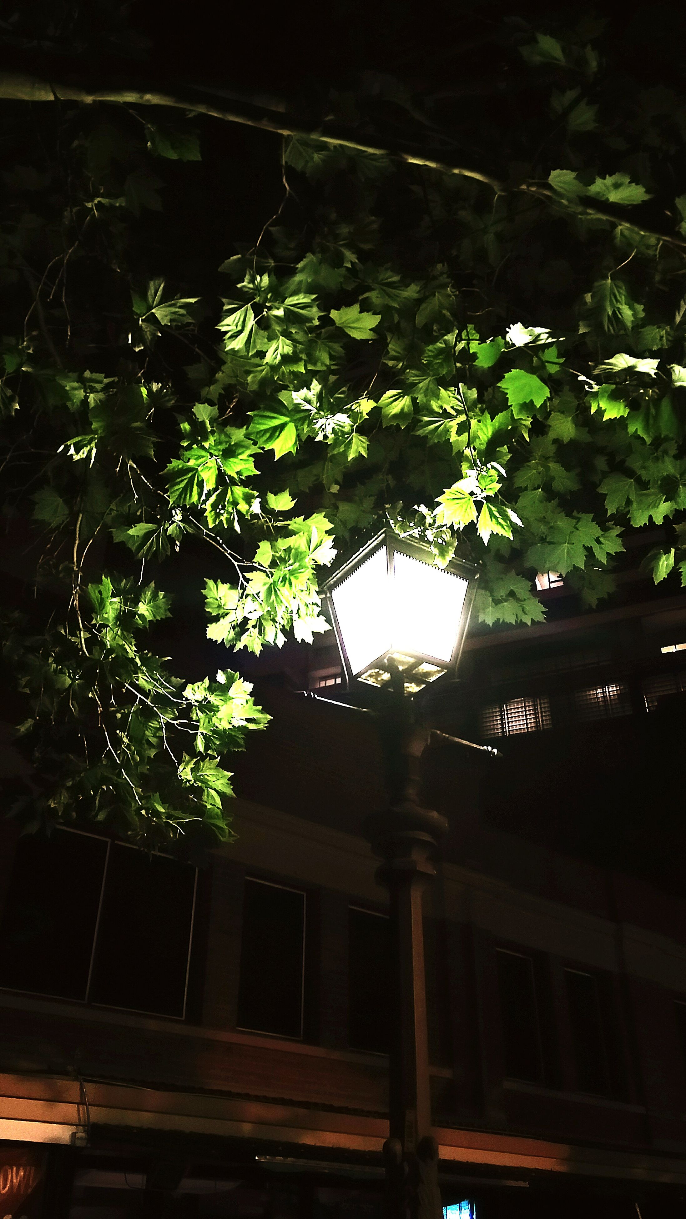 night, tree, built structure, growth, architecture, building exterior, illuminated, house, plant, green color, branch, nature, lighting equipment, low angle view, no people, outdoors, dark, window, street light, residential structure