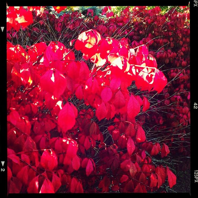 Fall foliage Nature Red Fall Colors