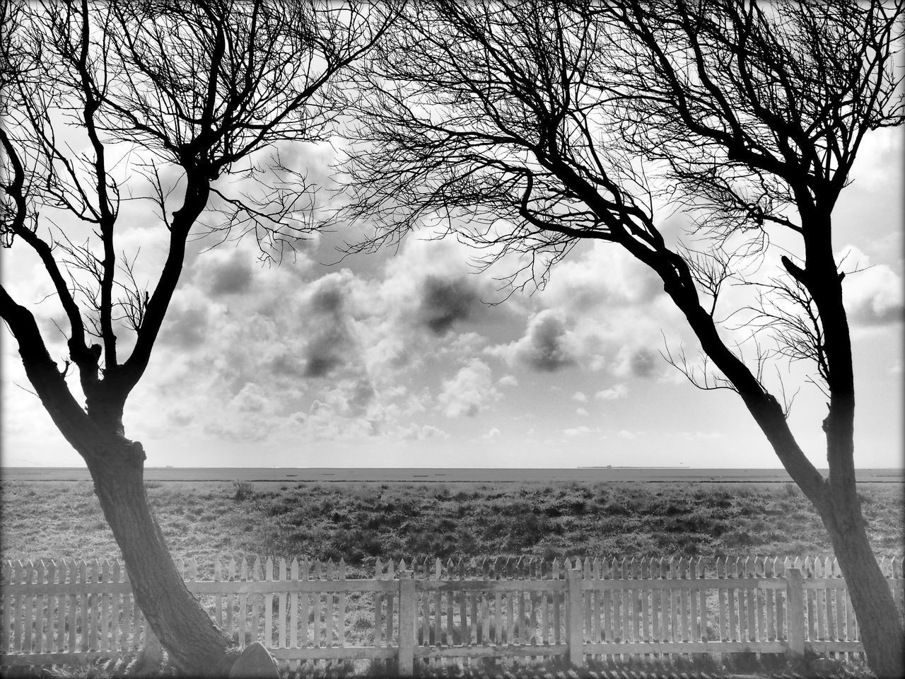 Beach Beauty In Nature Branch Cloud - Sky Day Growth Hallig Landscape Nature No People Outdoors Scenics Sea Sky Tranquility Tree