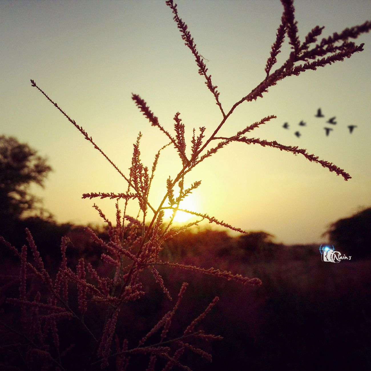 Sunset Detail.. Growth Nature Sunset Plant Beauty In Nature No People Close-up Flower Tree Outdoors Fragility Sky Freshness Day Floral Pakistan New River Riverside Red Gold Amazing