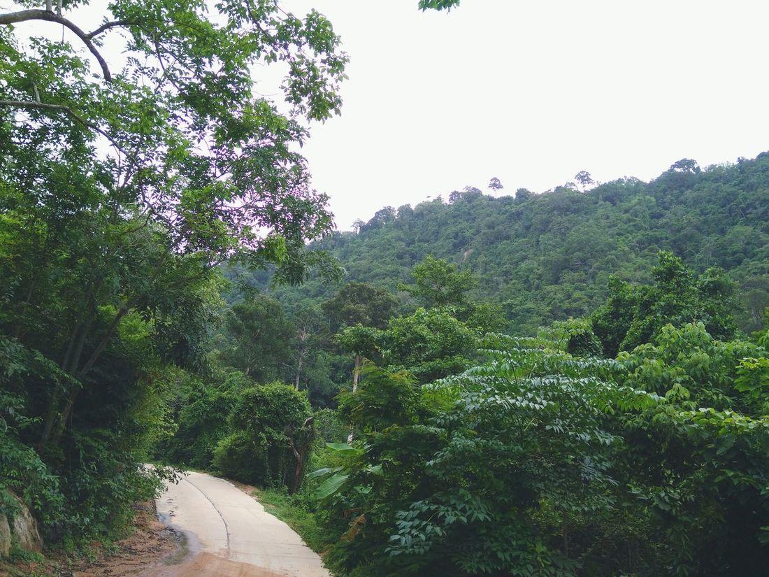 Street Nature Go With Me Green Trees Koh Samui Thailand