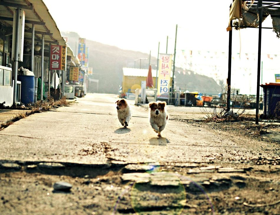 Beautiful stock photos of city, Active, Animal, Animal Themes, Changwon