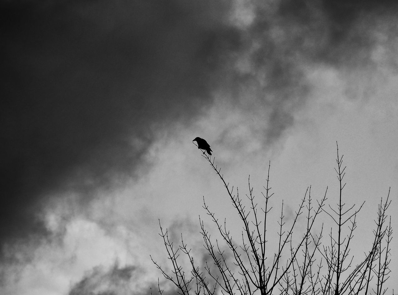 Low Angle View Of Silhouetted Bird Against Sky