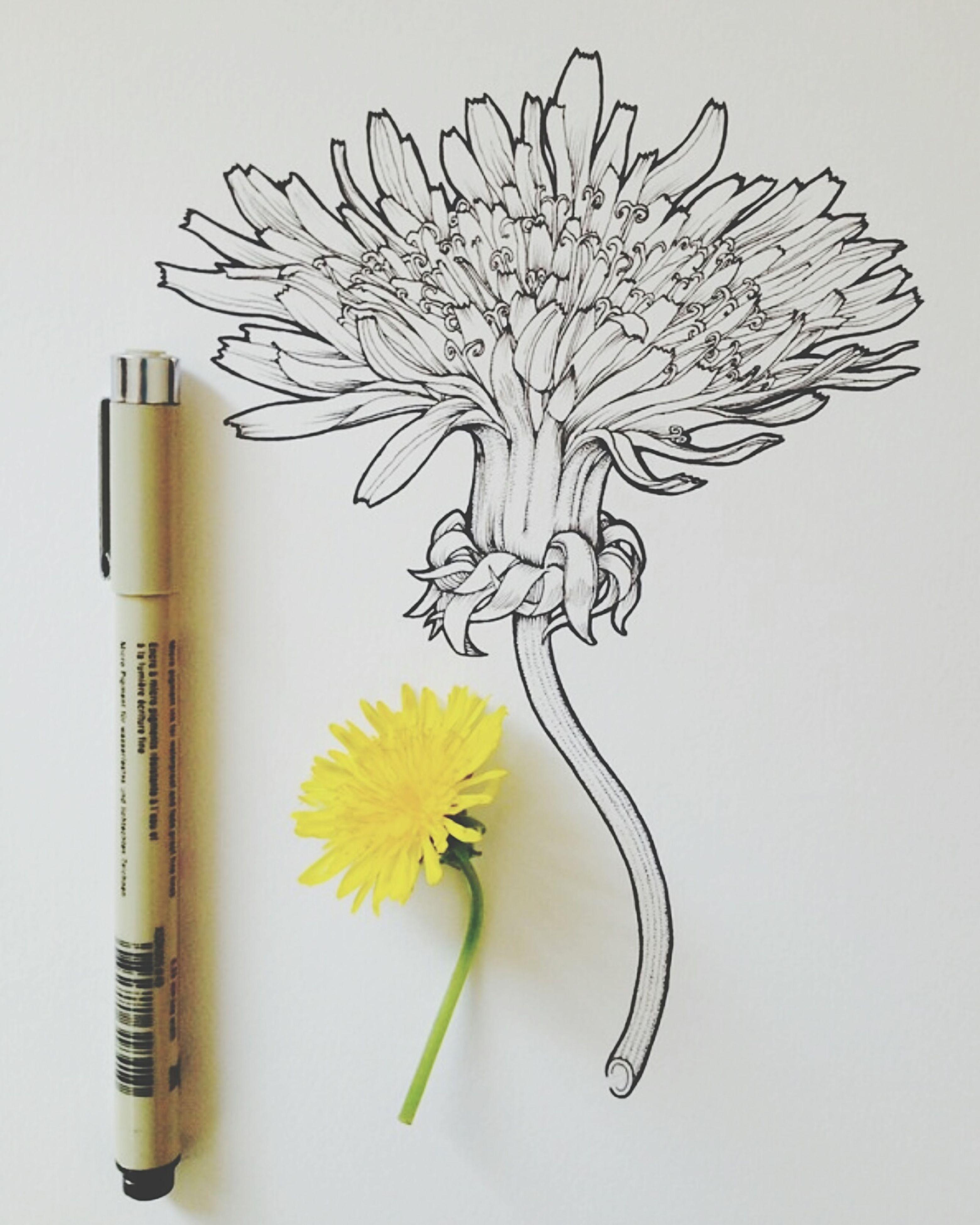 flower, yellow, studio shot, creativity, still life, close-up, art and craft, art, book, white background, ideas, stem, petal, freshness, painted image, arrangement, fragility, flower head