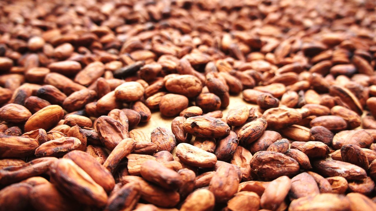 Food Food And Drink Abundance Backgrounds Close-up Large Group Of Objects Brown No People Healthy Eating Freshness Nature Cacao Cacao Beans Cacao Plant Chocolate Chocolate Time Beans Costa Rica Manufacturing Raw Materials Group Of Objects Brown Color