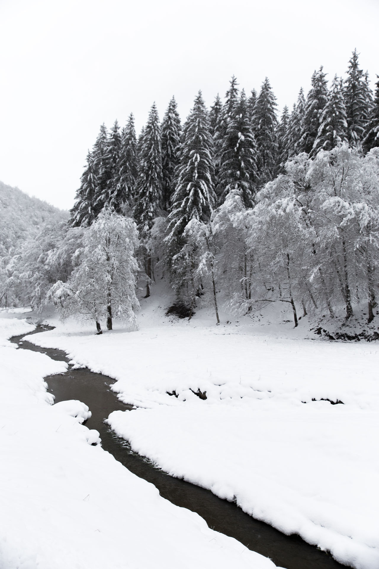 Beauty In Nature Cold Temperature Day Forest Forest Photography Growth Landscape Mountain Nature Nature No People Outdoors River Scenics Sky Snow Tranquil Scene Tranquility Tree Tree Weather White White Background White Color Winter