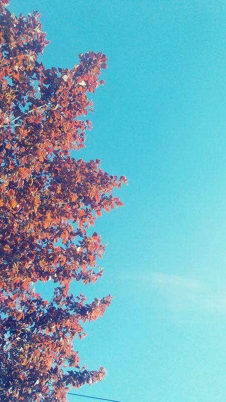 Blue Sky Sky Trees Gökyüzü❄⛄🎑 Ağaçlar ♥♡♥ Spring Ilkbahar Eskişehir