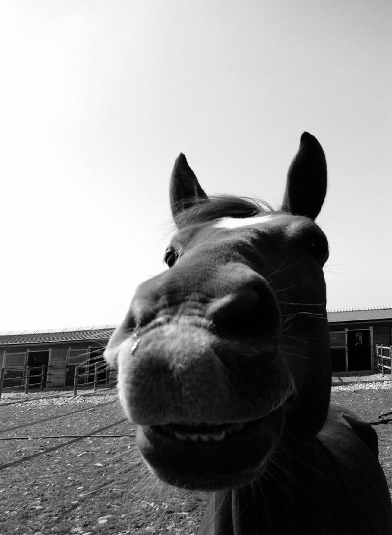 Forever different ;) Horses Horse Horse Riding Kiyomi Mitsuki Animals