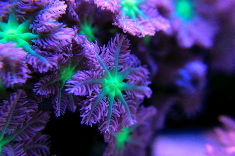 Saltwatertank Sea Coral Undersea Life Nano Aquarium Photographer Aquarium Photography Reef Coral Polyps Aquatic Reef Tank Aquarium Photography Scene Tank Reef Coral Reef Clavularia Tropical Fish Reefer Lps Coral Marine Marine Life Polyp