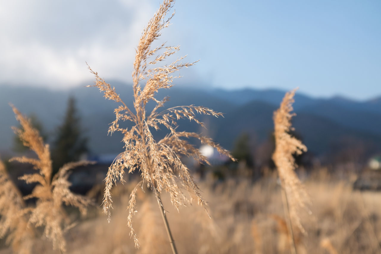 Beauty In Nature Botany Bright Close-up Day Evening Focus On Foreground Growing Growth Nature No People Non-urban Scene Outdoors Plant Reed - Grass Family Scenics Selective Focus Sky Stem Sunlight Tranquil Scene Tranquility Uncultivated