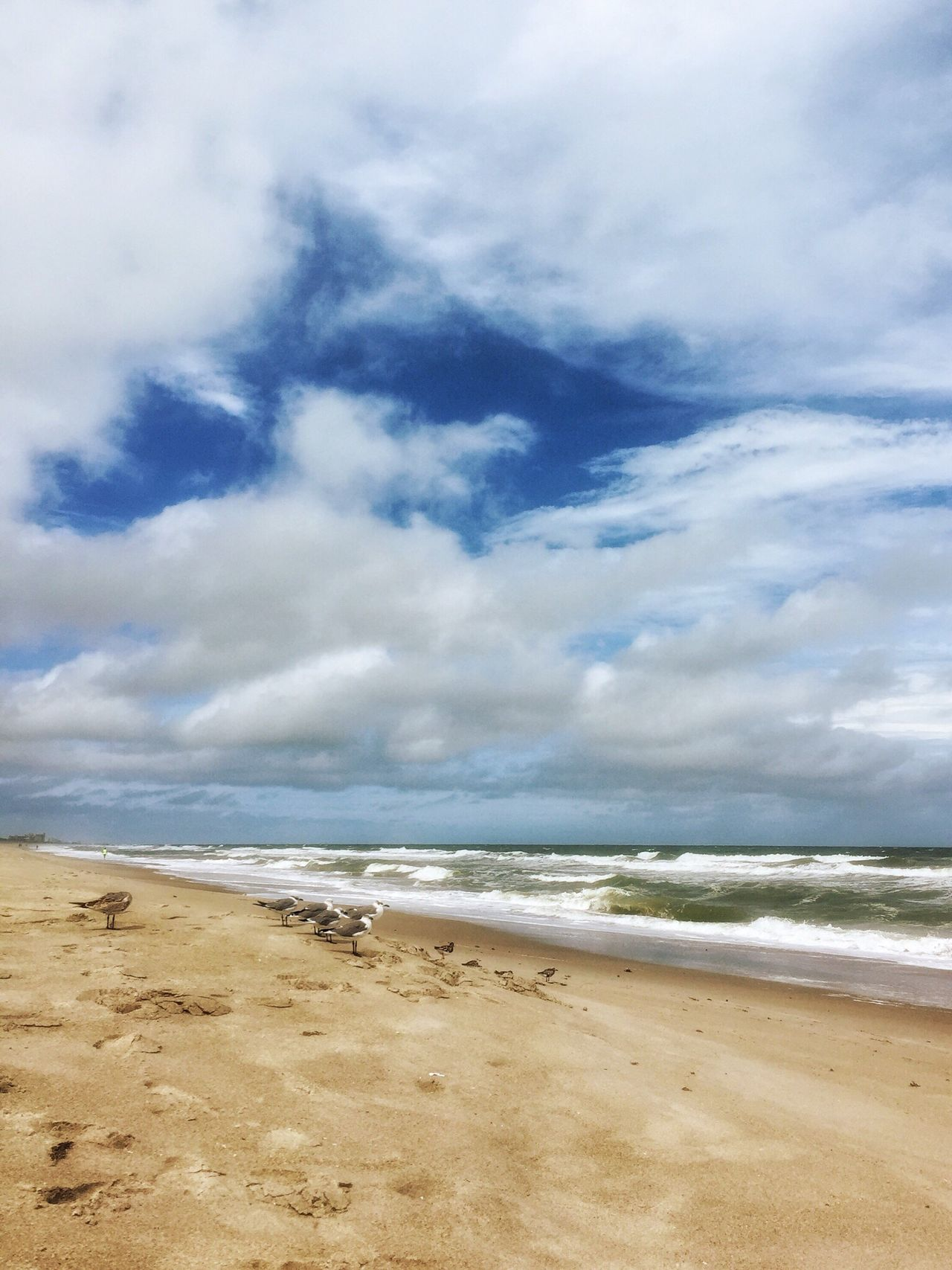 Shore birds Tranquil Scene Horizon Over Water Seascape Melbourne Beach, FL Oceanscape Cloud - Sky Beach Storm Clouds Windy Day Seagulls Shore Birds