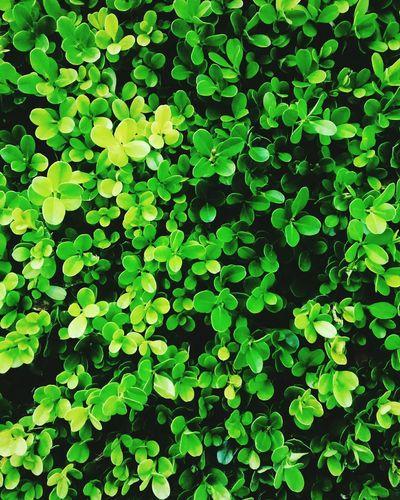 Tapiz Green Green Green!  Life Color Life Eyemphotography Photography Photoday