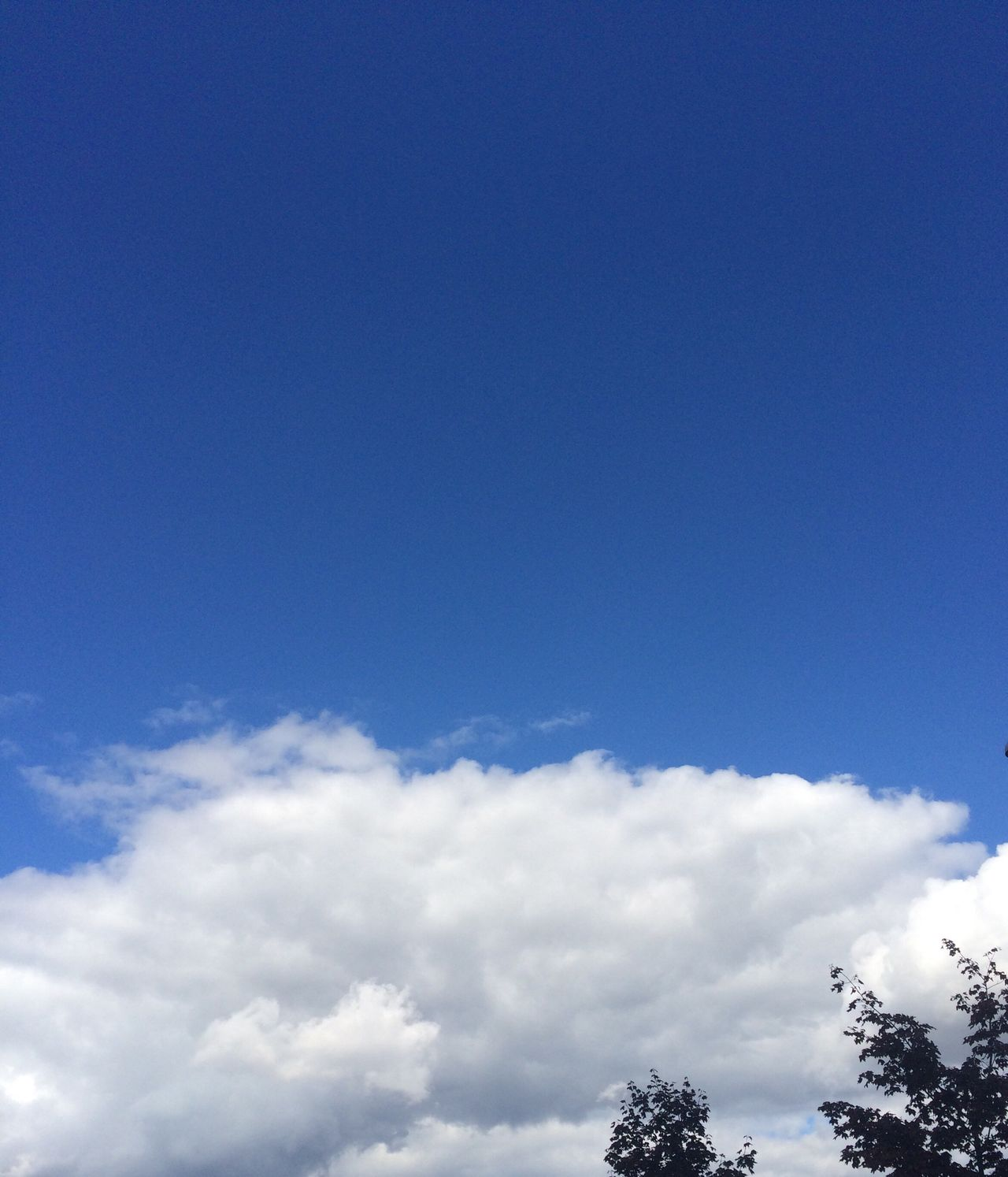 Sky Blue Cloud - Sky Low Angle View Nature No People Beauty In Nature Scenics Day Outdoors