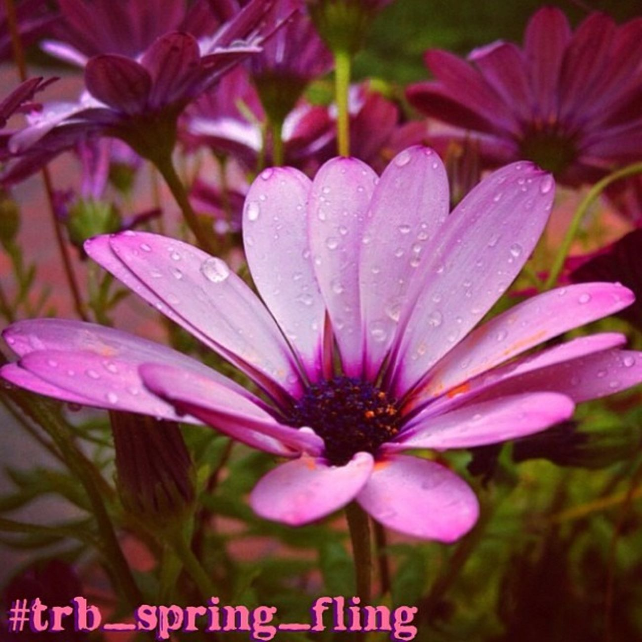 Trailblazers! Due to problems with pics going to tag pages, we are extending this weeks challenge #trb_spring_fling for another week.. Giving everyone a chance to enter their Spring theme pics! Spring is here and its time to celebrate the season.. Sprin Trailblazers_rurex Trb_spring_fling