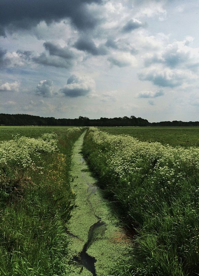 Walks The Great Outdoors - 2016 EyeEm Awards Dutch Landscape Enjoying Nature