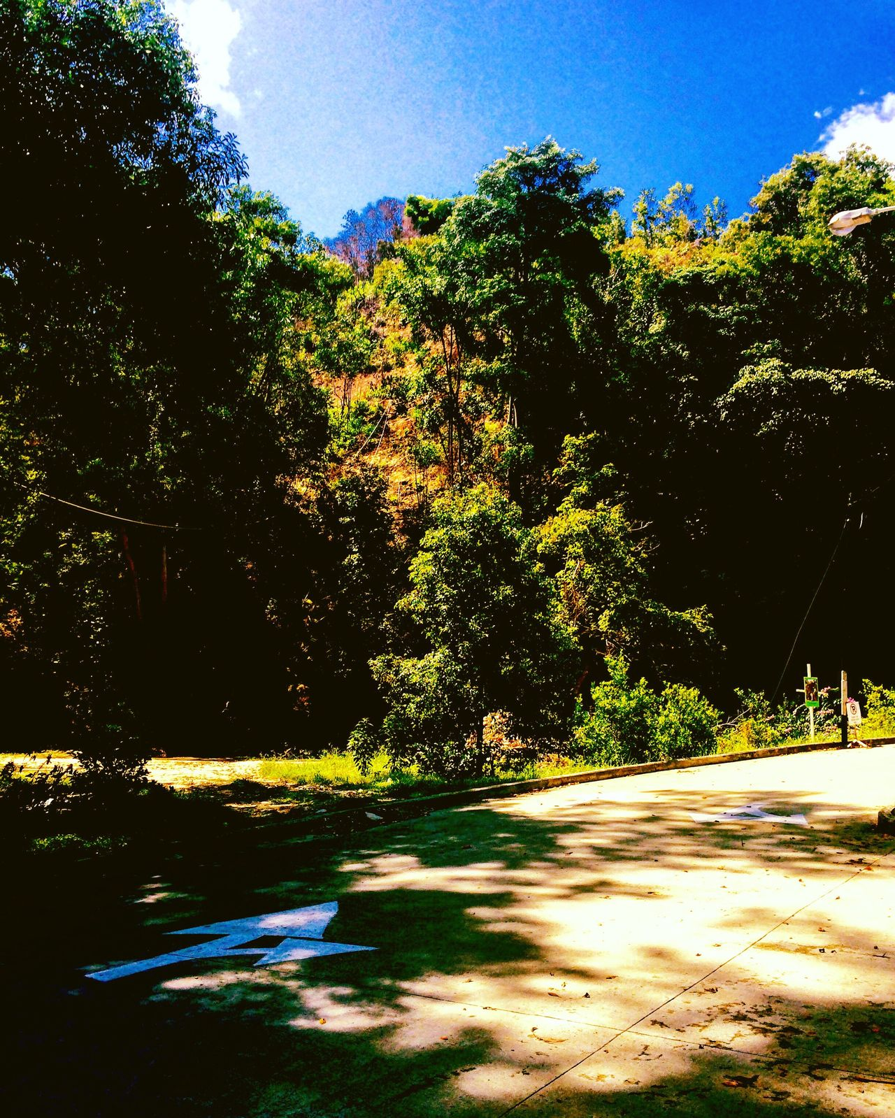 The Road Not Taken By Robert Frost Poem Nature Arrow Inspiration Motivation Travel ChoicesInLife Mernalin Amdan The Road Not Taken Two roads diverged in a yellow wood, And sorry I could not travel both And be one traveler, long I stood And looked down one as far as I could To where it bent in the undergrowth; Then took the other, as just as fair And having perhaps the better claim, Because it was grassy and wanted wear; Though as for that the passing there Had worn them really about the same, And both that morning equally lay In leaves no step had trodden black. Oh, I kept the first for another day! Yet knowing how way leads on to way, I doubted if I should ever come back. I shall be telling this with a sigh Somewhere ages and ages hence: Two roads diverged in a wood, and I — I took the one less traveled by, And that has made all the difference.