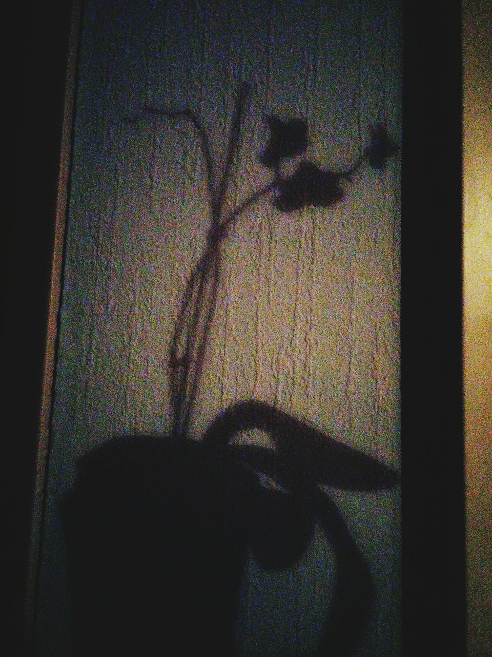 shadow, focus on shadow, indoors, silhouette, sunlight, no people, animal themes, day, close-up, mammal