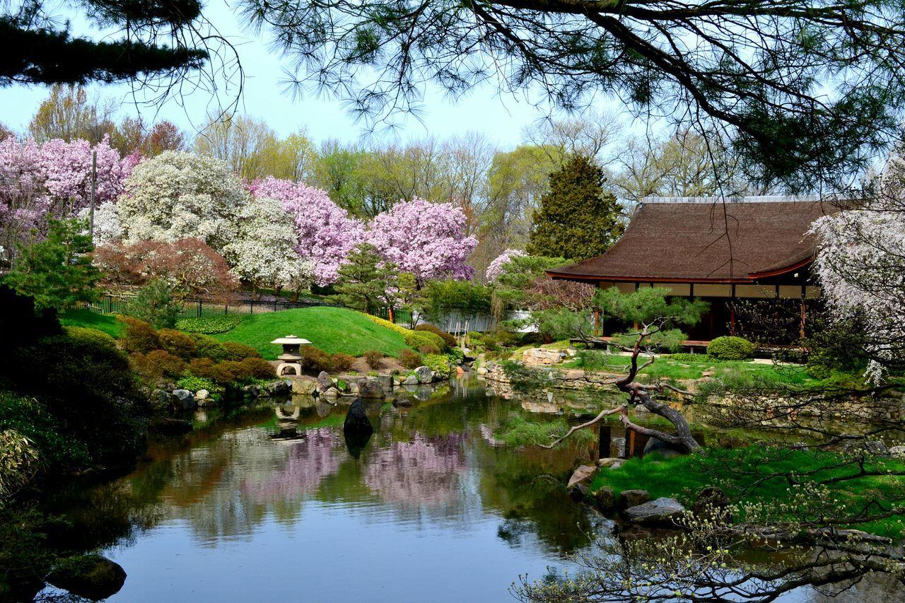 Japanese Garden Philadelphia Fairmountpark Cherry Blossoms Showcase April
