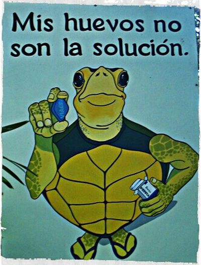 Tortugas Viagra Zoo Ave  Proteger Tortugas
