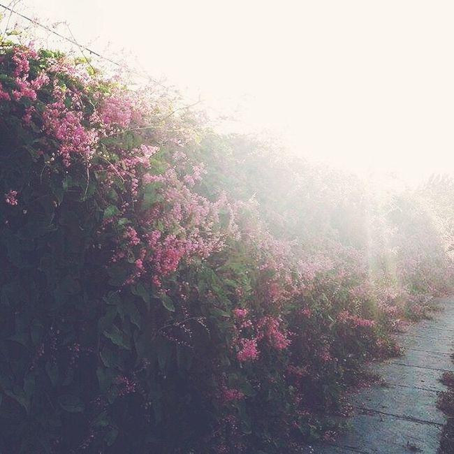 Morning Sunshine Garden Wanderlust Romantic Flower Flowerslovers Dawn Sunrise Nature Beautiful Instadaily Afterlight Sun Art Happy Azn