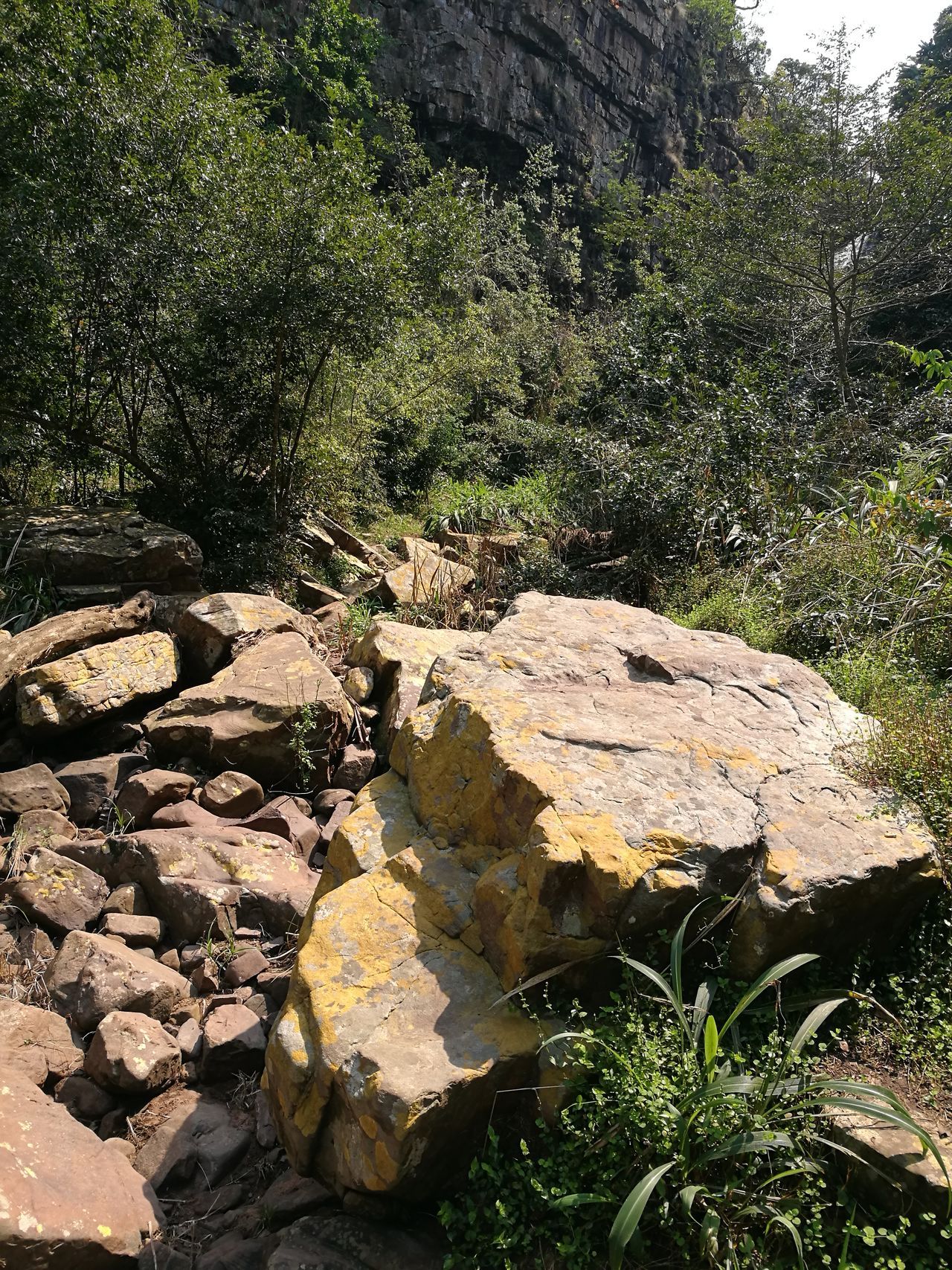 Natural Rockery Nature Rock - Object Growth Plant Non-urban Scene Day Field Beauty In Nature Tranquility Tranquil Scene Outdoors Scenics Stone Rock Formation No People Fragility Remote Durban,Outer West Kwazulu Natal