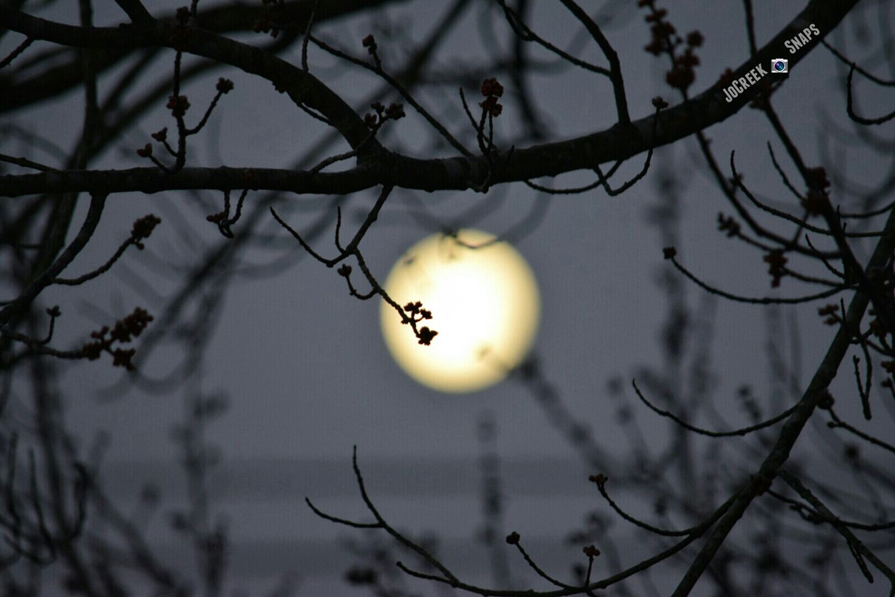 Not sure which one I like better. This Is My Thank You... For My Friends That Connect Streamzoofamily Moonset Ladyphotographerofthemonth Check This Out EyeEm Best Shots Nikon D3300