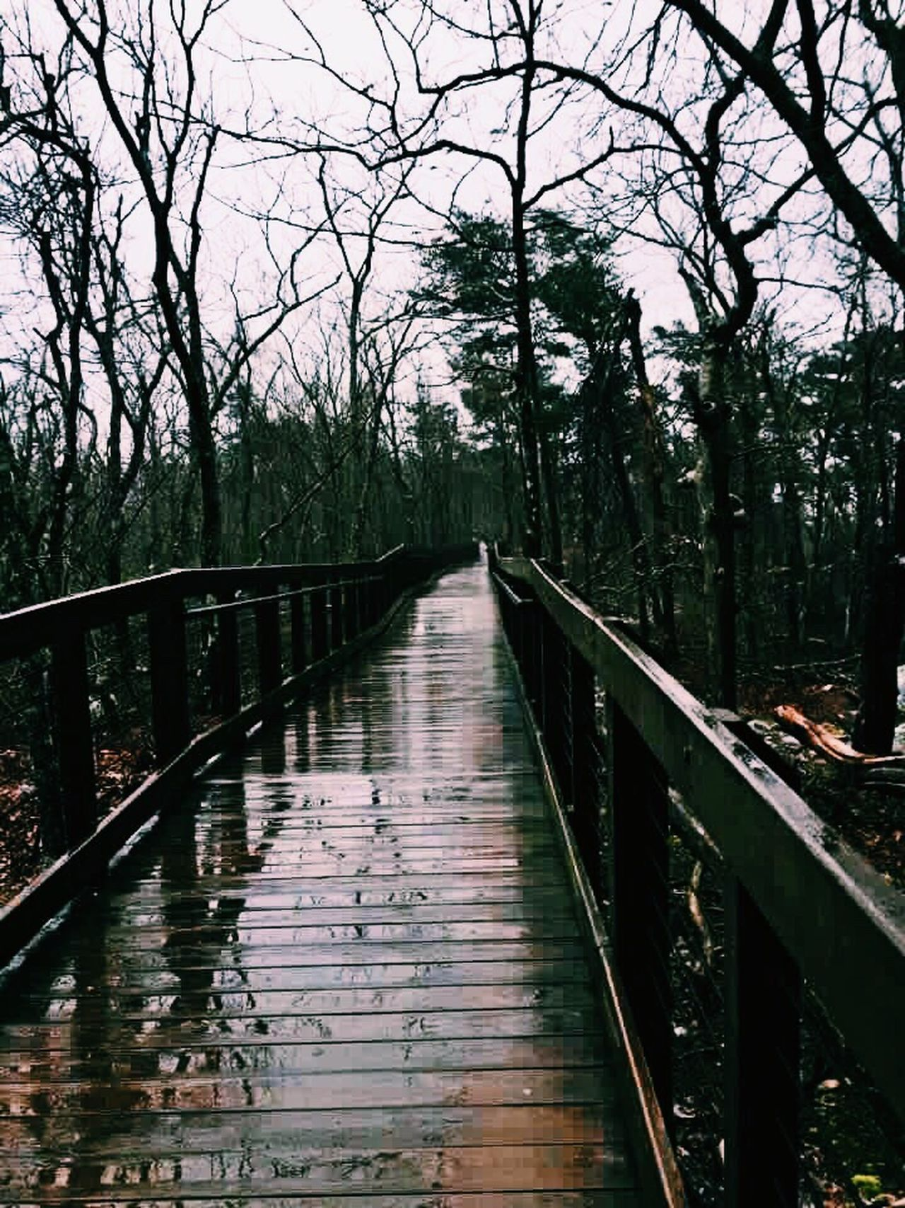 😌🍃🌨 Rain Photography Walking Bridge Wet Nature