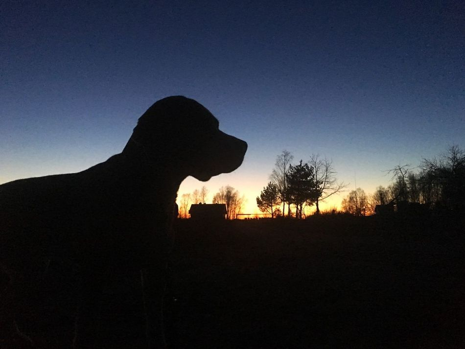 Silhouette Sunset Clear Sky Outdoors Sky Nature Evening Evening Sky Silhouettes Nature Standing Dog Domestic Animals No People House Beagle Pet Evening Light Silhouette Trees Orange Sky Sunset
