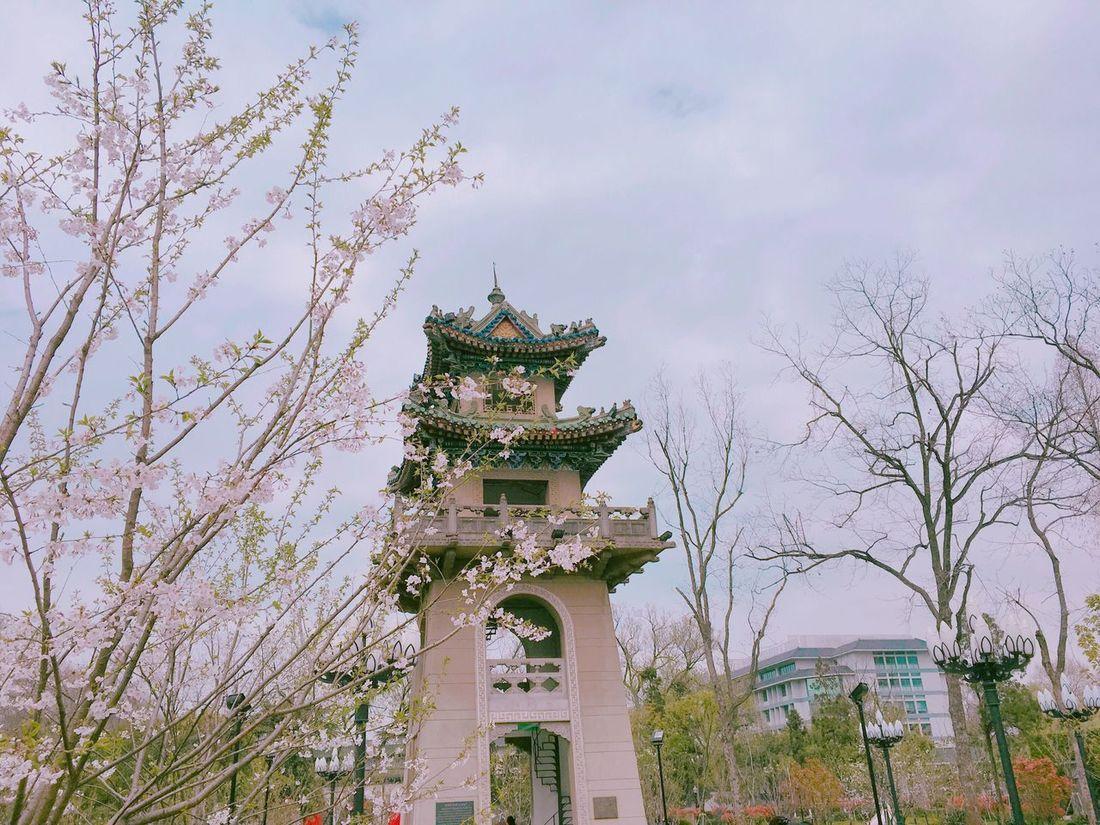 Jiming Temple Park,March,Sakura. Jiming Temple Nanjing Trees Nature Pink Sakura China March Spring Flowers Park