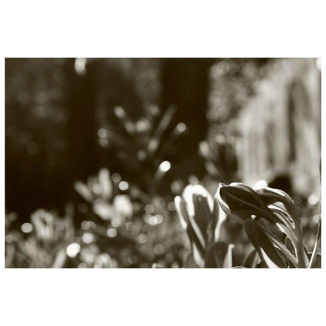 ..Altrove... {Sepia mood } | A Blurblues tbt from 🍃 GiardiniVeneziani FourGardensOneCommunity instameet 🍃 ✨ InstaTellers ✨ | No Filter | Taken with 📷 Canon EOS 1100D | IG_Venice IG_Veneto IG_Italy IG_Europe IG_WorldClub RSA_bnw IG_Exquisite IG_Masterpiece Gununkaresi VisitVeneto Venice blackandwhite InstaGarden Garden BrowsingItaly Foto_Italiane InstagramHub 2InstaGood AllShots_ ShotWithLove Big_Shotz Gunukaresi tv_pointofview_bnw