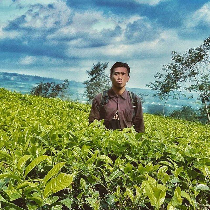 Tea farm Wonosobo Dieng Telogomenjer Holiday Dadakan