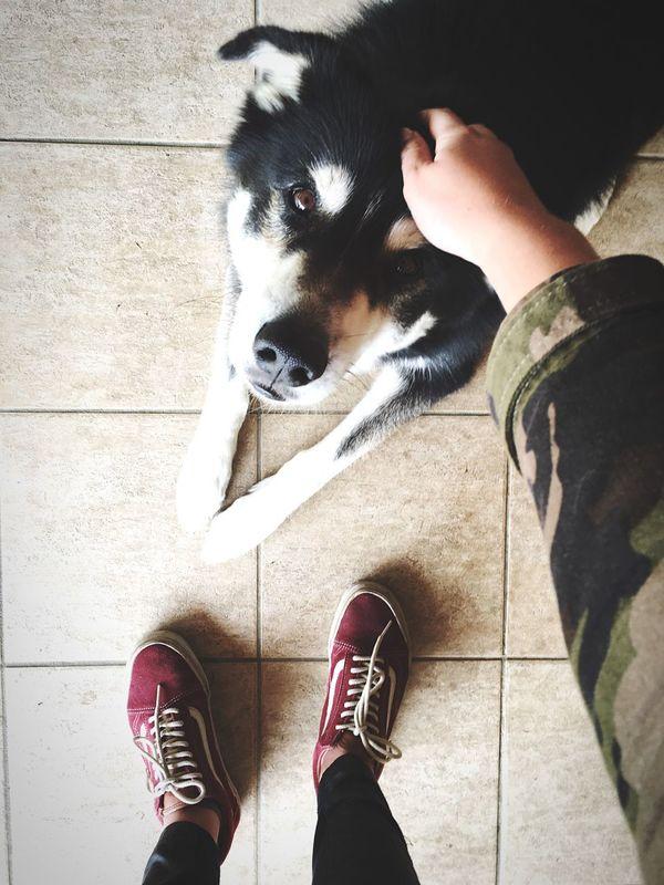 Petlover Amos Dog ☀️