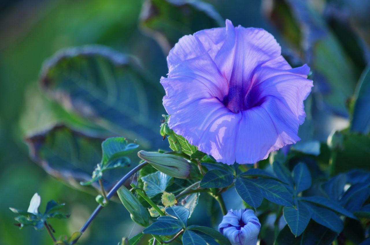 Andalucía SPAIN Beauty In Nature Blooming Close-up Day Flower Flower Head Focus On Foreground Fragility Freshness Growth Leaf Nature No People Outdoors Petal Plant Purple Color