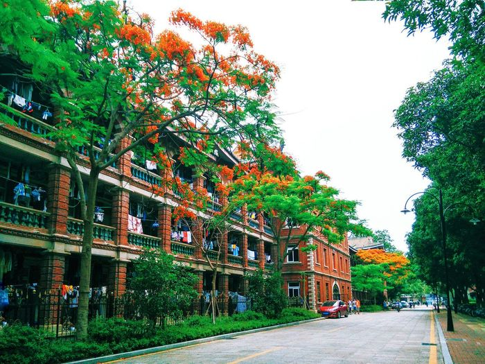 Flame Trees are In Bloom At University On Campus Dorm Dormitory Flame Tree Flametree City Trees Red Flowers Architecture Traditional Architecture Architecture_collection 鳳凰木 鳳凰花 鳳凰花開的季節 Delonix Regia Delonixregia The Essence Of Summer EyeEm Gallery EyeEm Best Shots University