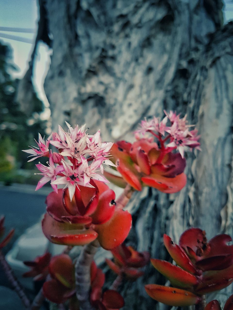 flower, petal, beauty in nature, fragility, nature, no people, growth, flower head, close-up, day, red, outdoors, plant, freshness