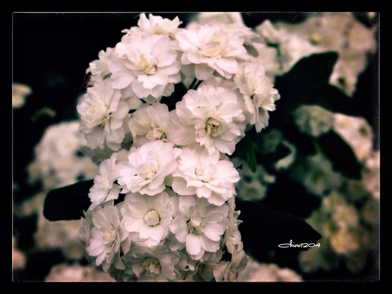 flower, growth, nature, spring, blossom, plant, beauty in nature, petal, summer, blooming, close-up, no people, fragility, freshness, flower head, outdoors, day