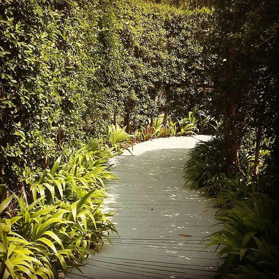 Choose ur own way Green Path Nice Twinklyjourney
