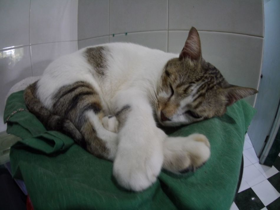 Pets Corner Cat Pets