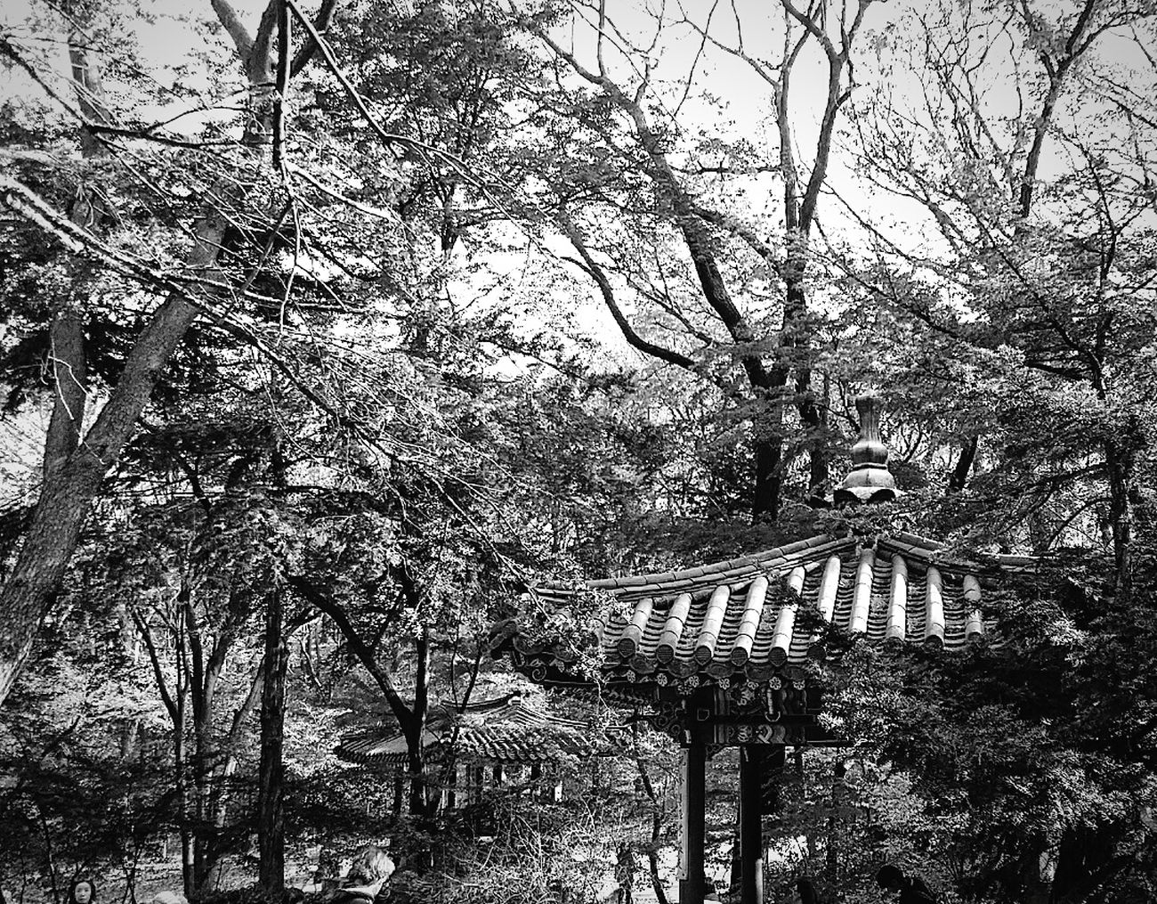 Pavilion Secret Garden Changdeokgung Palace Autumn2014 Black & White Travel Photography Beautifulkorea Seoul Korea