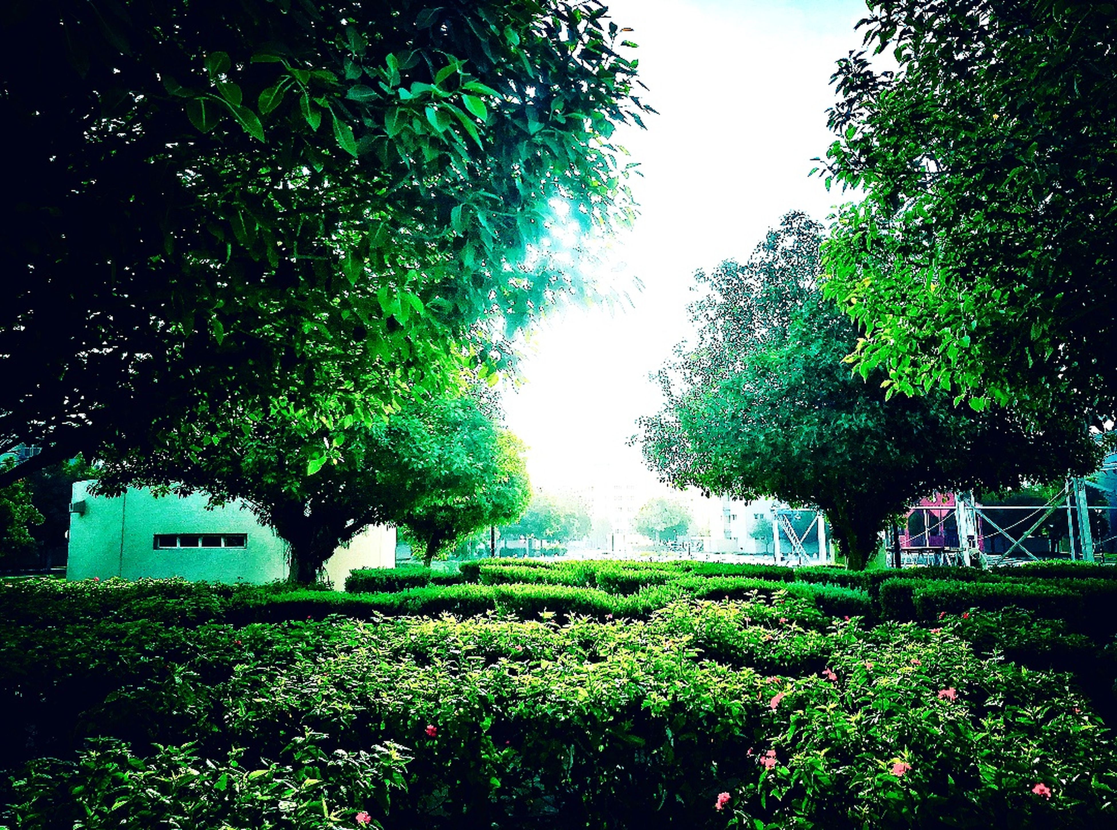 tree, green color, growth, nature, lush foliage, day, outdoors, beauty in nature, no people, plant, tranquility, built structure, architecture, scenics, grass, sky