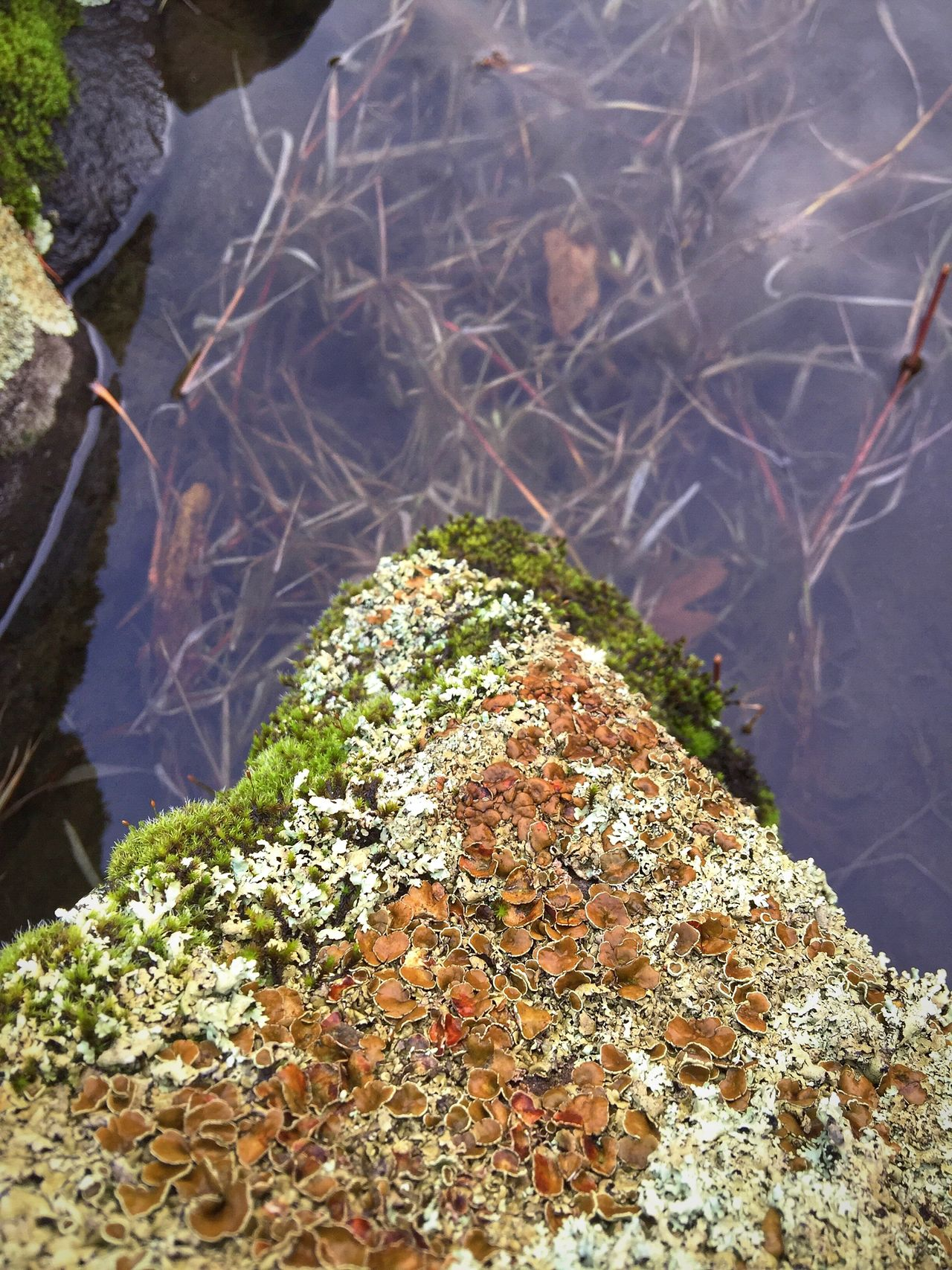 Water Outdoors Close-up Growth Beauty In Nature Rock Formation Weathered Layers And Textures Abstract Nature Shapes In Nature  Perspective Views Scenic Natural Condition Moss & Lichen Abstractions Backgrounds Textured  Tranquil Scene Scenics View