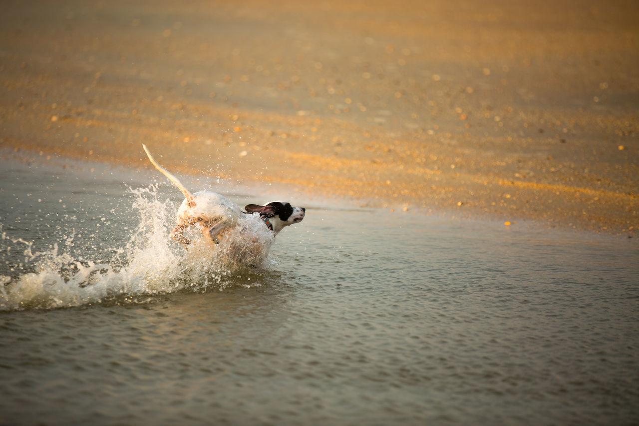 Beautiful stock photos of ocean, Animal Tail, Animal Themes, Beach, Day