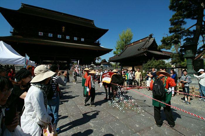 牛に引かれて善光寺参り🐮 善光寺 (zenko-ji Temple) Taking Photos お写ん歩 Japanese Culture Japanese Temple EyeEm Gallery緊張してたようで公衆の面前で💦💦隠しました😅