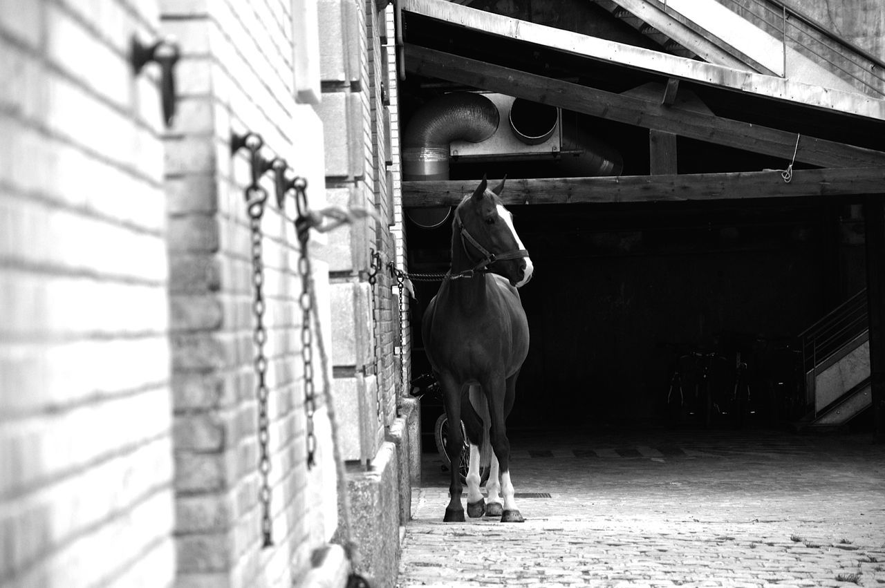 Horse Animal Themes Architecture Beautiful Beauty In Nature Black & White Blackandwhite Built Structure Day Domestic Animals Horse Livestock Mammal No People Outdoors Since Working Animal