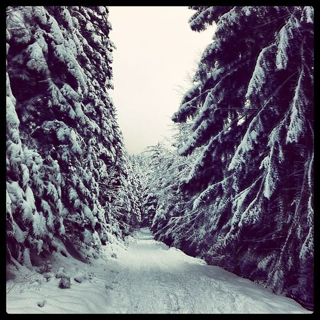 Instrcool Instragram Instrasnow Photointheday photooftheday snow france hoplagram labresse montagne mountain vosges neige