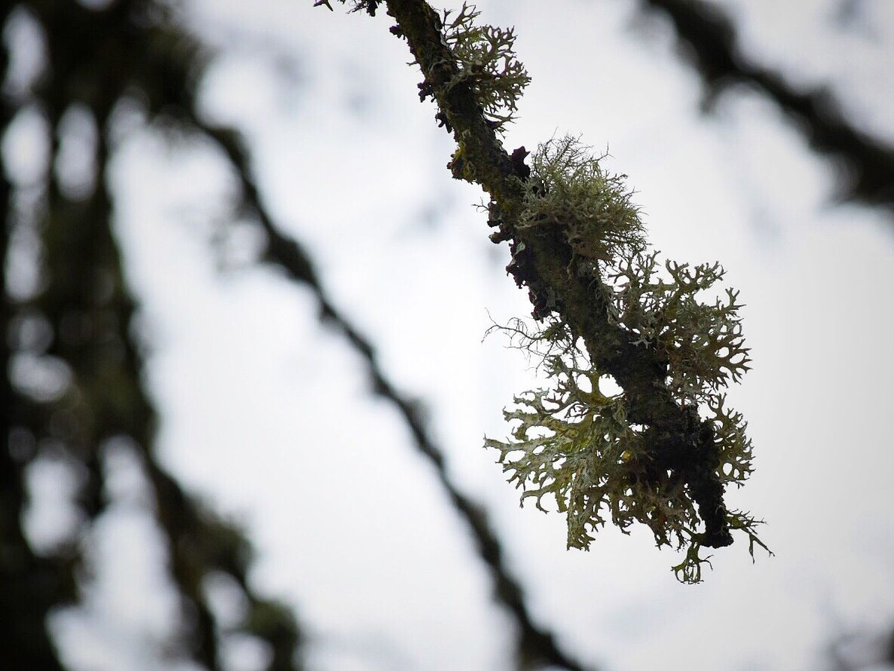 Nature Growth Low Angle View Branch Beauty In Nature Tree Close-up Outdoors No People Flower Day Fragility Freshness Sky Spring Springtime Plant Beauty In Nature Nature Growth Tree Moss & Lichen Moss Mossy Branches