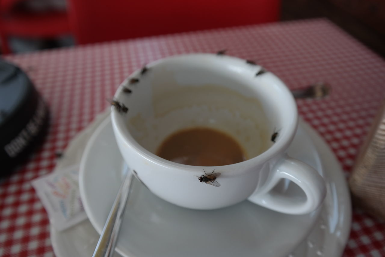 Close-Up Of Flies On Empty Coffee Cup