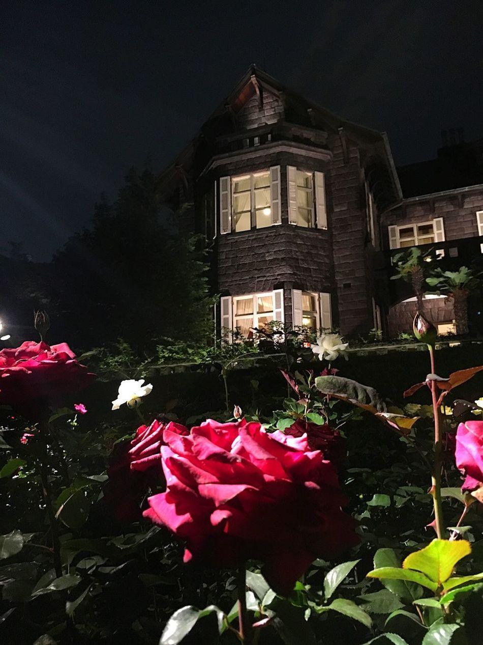 Red Rose Garden Iphone6s